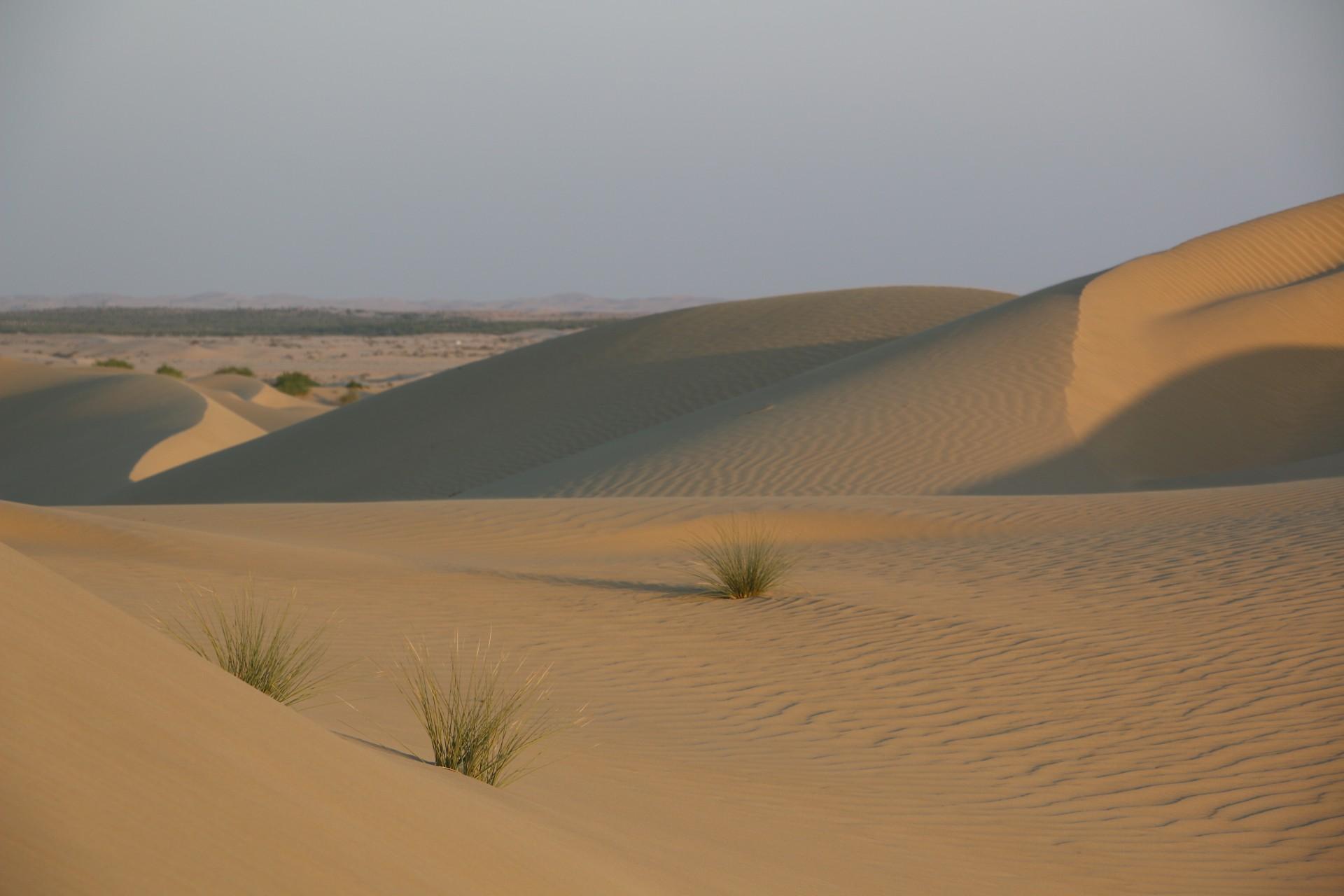 Balade dans le désert.