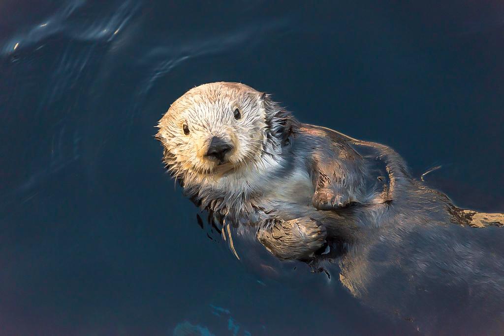 """<i class=""""fa fa-film""""></i>– L'aquarium de Monterey"""