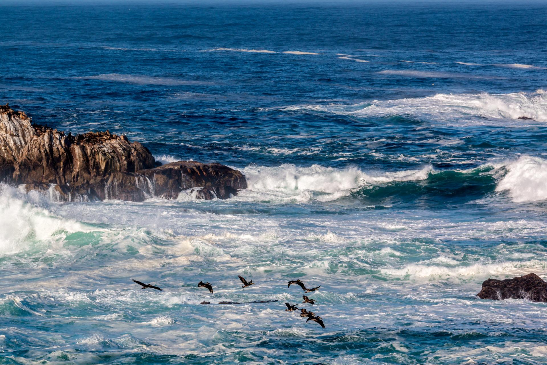 """<i class=""""fa fa-film""""></i>– La réserve de Point Lobos"""