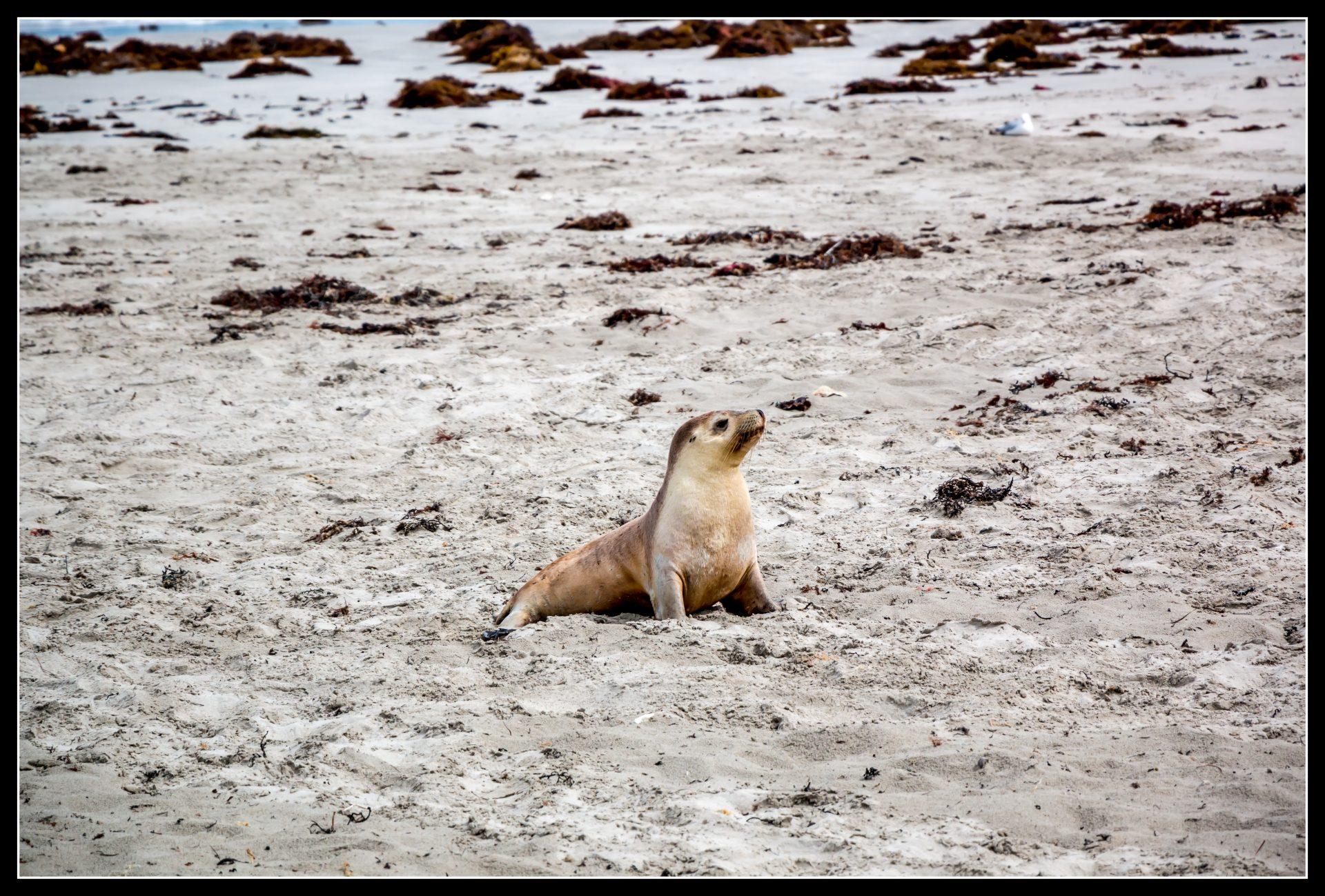 """<i class=""""fa fa-film""""></i>– Seal Bay"""